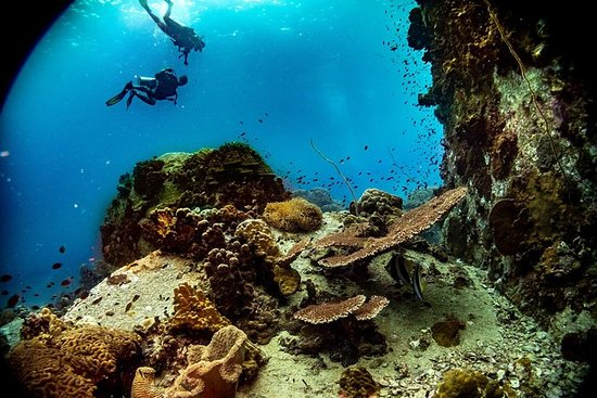 2 Fun Dives! - For Certified Divers