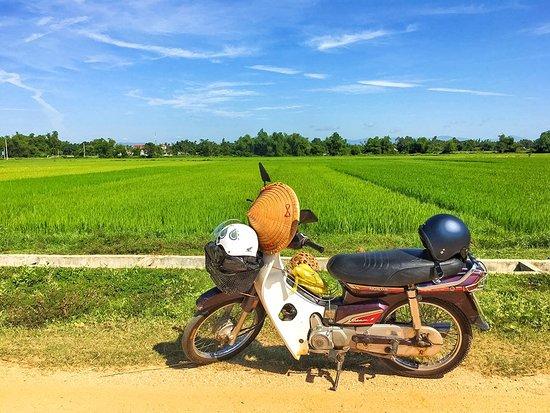 Провинция Намдинь, Вьетнам: Green field