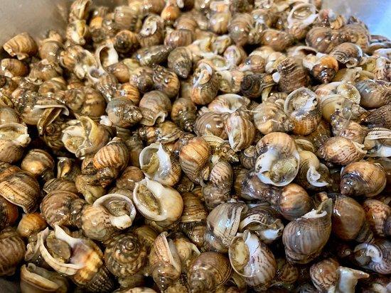 Ristorante Il Trovatore: Lumache di mare
