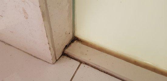 Filthy moldy bathroom.