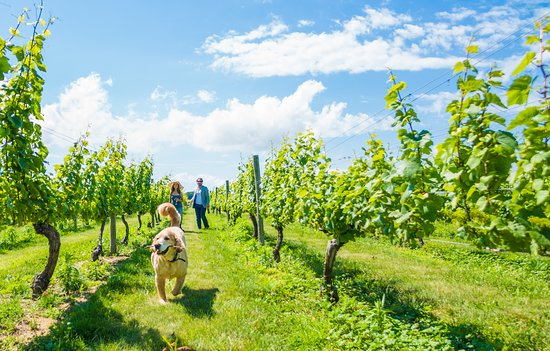 Long Island, NY: Award Winning Vineyards on the North Fork