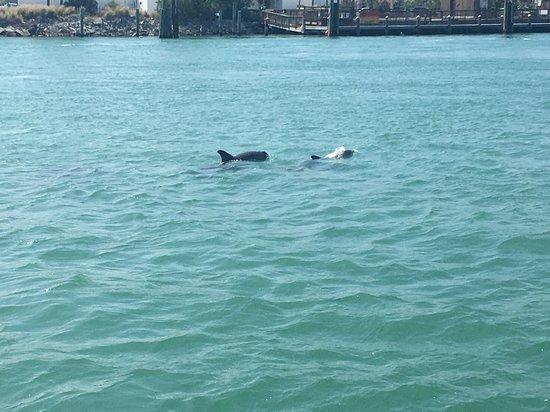 Madeira Beach, FL: Dolphin pod