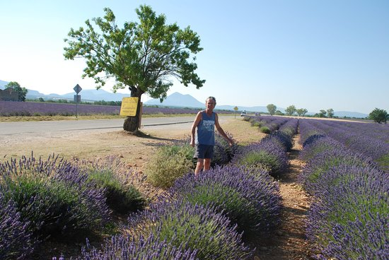 Best of Provence Tours
