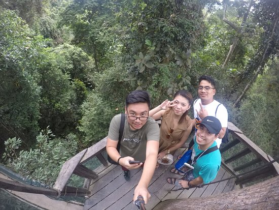 view from the top of canopy walk