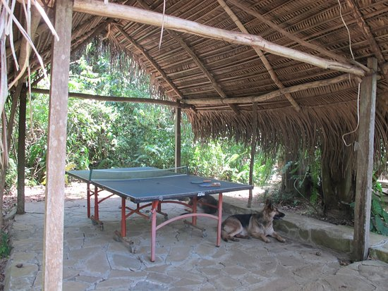 San Antonio, Belize: Table tennis.
