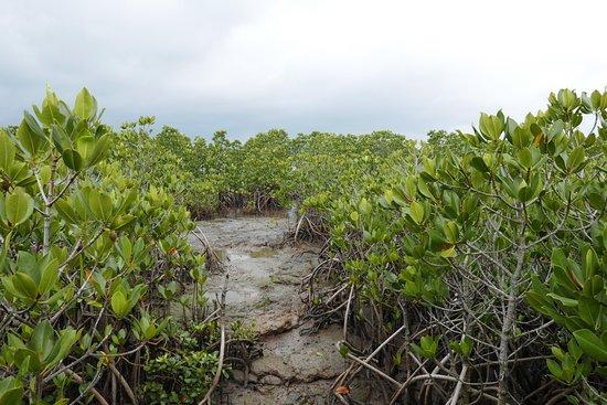 Mangrove at Ishinagata Beach
