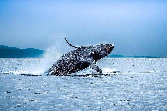Tour di avvistamento di balene al