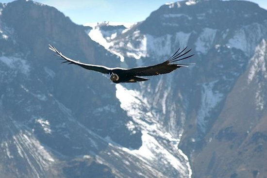 Apurimac峡谷与神鹰从库斯科查看