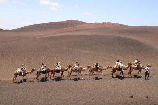 Kameelsafari in Timanfaya