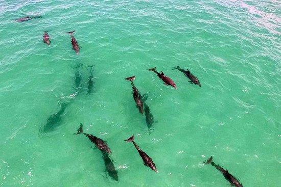 小团体海豚和浮潜之旅