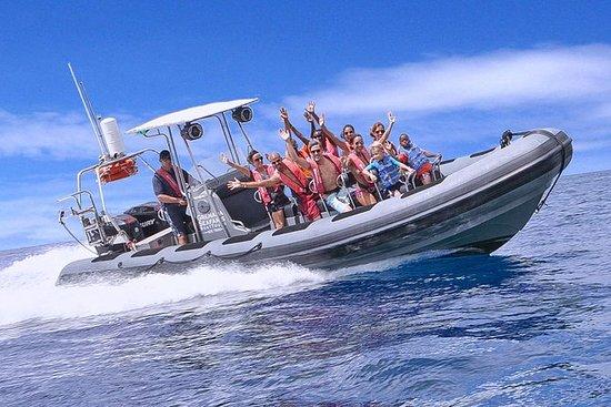 Escultura Snorkel y Powerboat Visita...