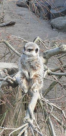 London Zoo Entry Ticket: Meerkat