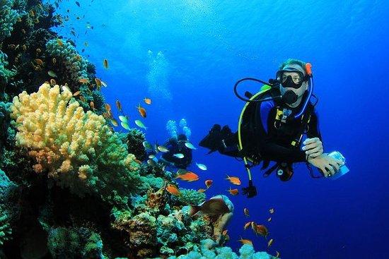 Activité de plongée sur l'île de...