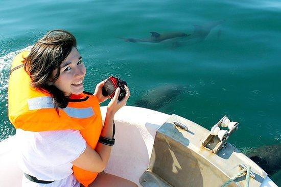 观看Olhão的海豚