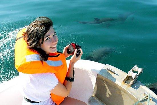 Avistamiento de delfines desde...
