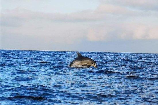 Observação de golfinhos Sibenik