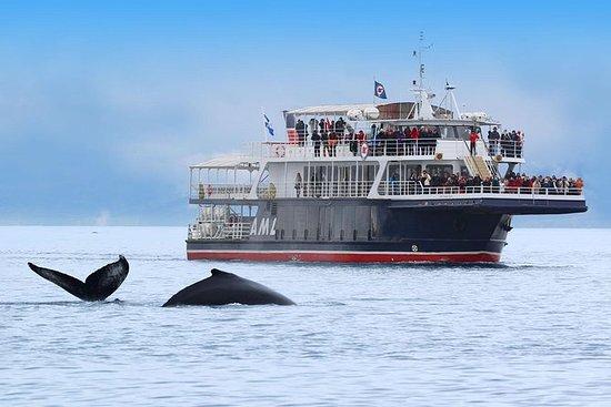 Croisière aux baleines et fjord à...