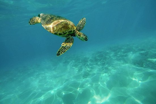 The VIP Eco-friendly turtle tour