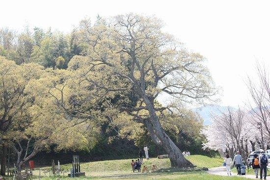 Kanogawa Sakura Park