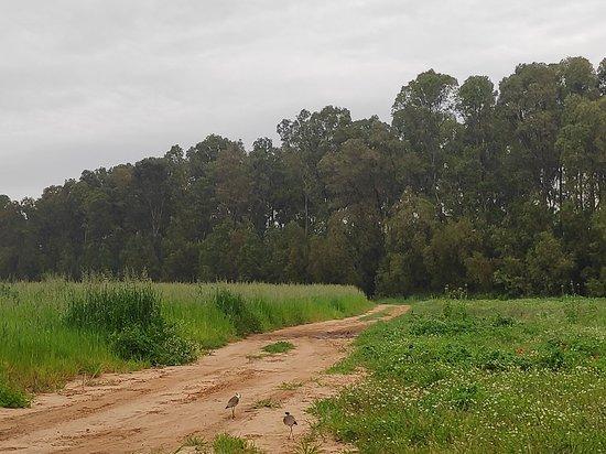 HaSharon Park: הדרך לפארק