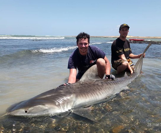 Vila do Maio, כף ורדה: Tiger Shark - Shark Fishing Fishing Cape Verde