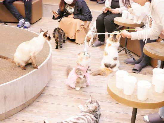 Cat Cafe Mocha Tachikawa