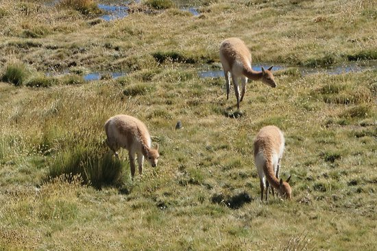 We stopped to observe some vicuñas and plenty of other fauna along the way.