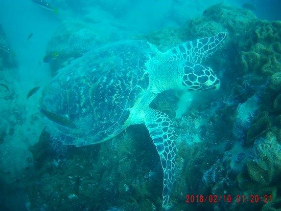 The underwater divine
