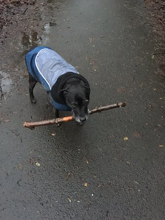 Stella at the park.