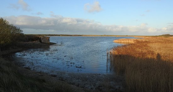 At Titchwell Marsh, Island Hide, Teal and Muntjac deer