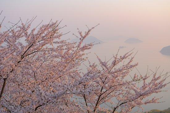 Mt. Shiude: 朝日を浴びて