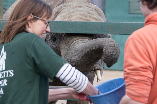 Howletts Wild Animal Park: Elephant Keeper for the Day - Such a wonderful experience