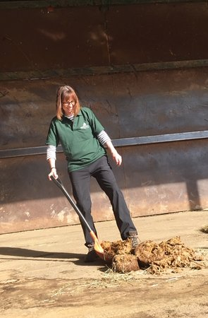 Howletts Wild Animal Park: Hard work behind the scenes during my Elephant Keeper for the Day