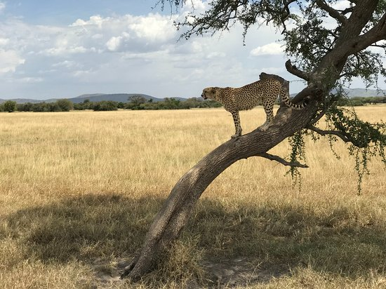 Masumin car hire & safaris: Leopard