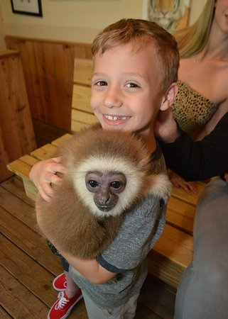 Myrtle Beach Safari - All You Need to Know BEFORE You Go ...