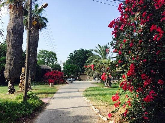 الجليل, إسرائيل: The beautiful scenery of Kibbutz Kfar Masaryk.
