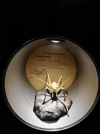 Riproduzione di insetto ingrandito.
