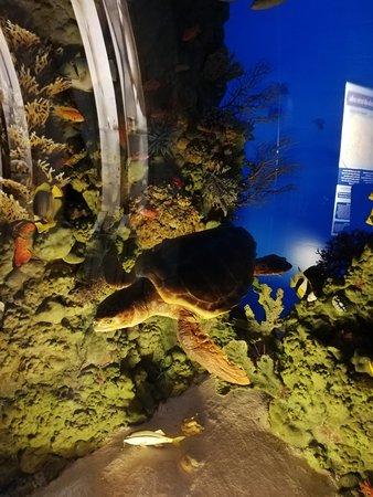 Fondale marino con tartaruga.