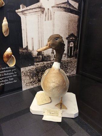 Un esemplare della collezione ornitologica del Conte Ettore Arrigoni degli Oddi.