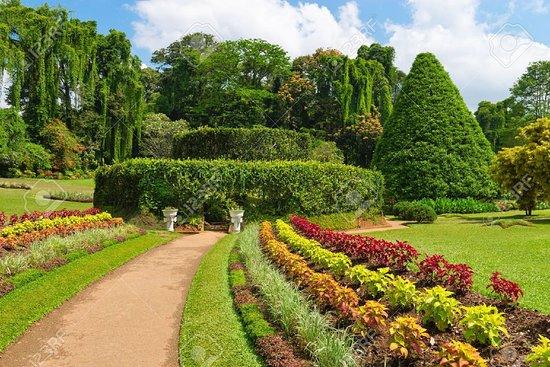 Kandi, Šri Lanka: Royal Botanical Garden Peradeniya