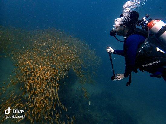 Super Divers: Just amazed