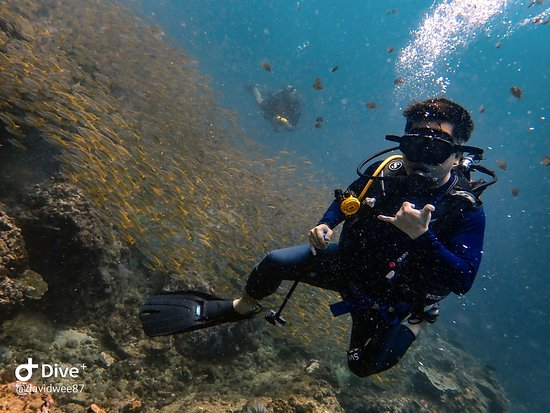 Super Divers: School of fishes