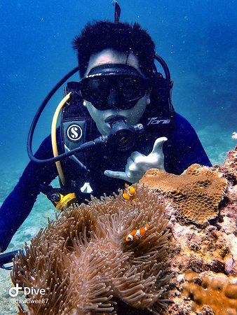 Super Divers: time with Nemo