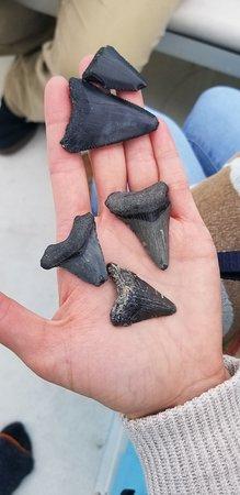 Teeth found on a fossil hunt