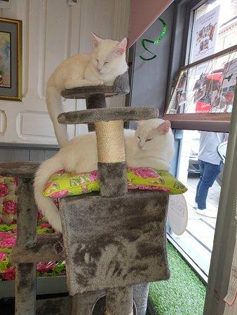 Shakespaw Cat Cafe – fénykép