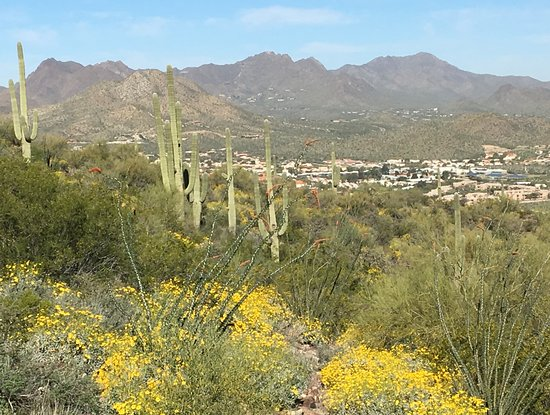 Hill's scenery in spring.