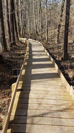Yellowwood State Forest: Boardwalk on Tecumseh trail