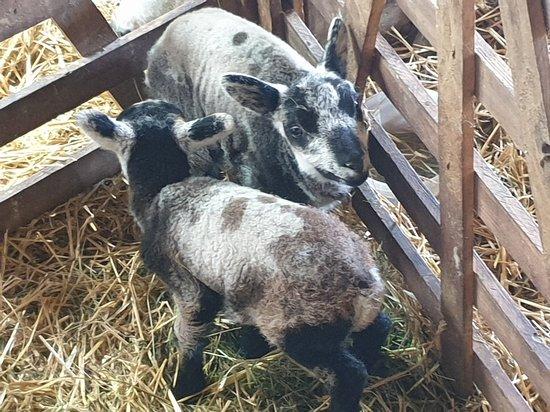 East Layton, UK: Mainsgill Farm