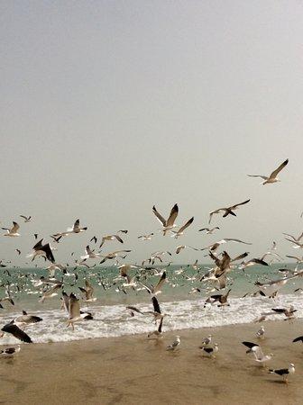 Ruwi, עומאן: Gabbiani ci incoronano al nostro passaggio 