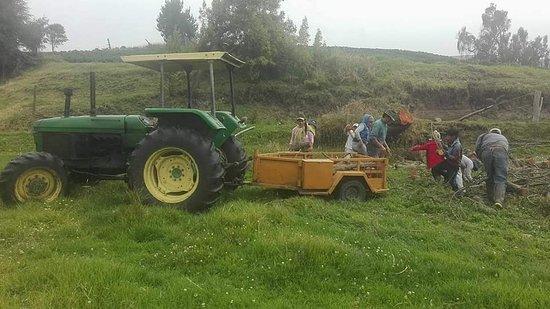 Tungurahua Province, Equador: Agro turismo - Vivir un día como un verdadero chagra, realizando las tareas diarias.